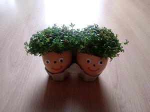 Pomysł na świąteczną dekorację– rzeżucha w skorupkach od jajek
